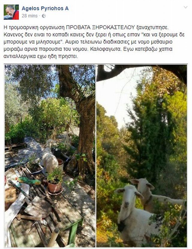 pyriochos_arnia2