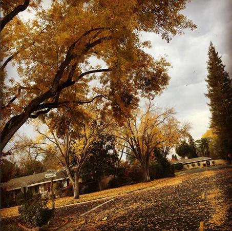 Αυτή είναι η εντυπωσιακή θέα από την αυλή του σπιτιού της Αλέκας Καμηλά και του Πέτζα Στογιάκοβιτς στην Καλιφόρνια